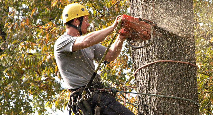 03-Tree Service – Discover What They Can Offer You